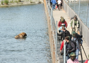 An example of how close we got to grizzly bears.